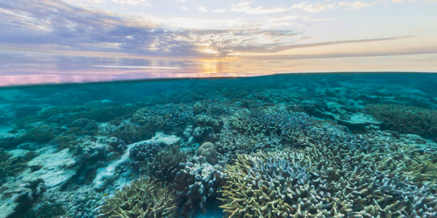 coral reef and great barrier reef